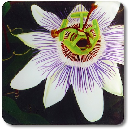 Passion Flower Glass Coaster