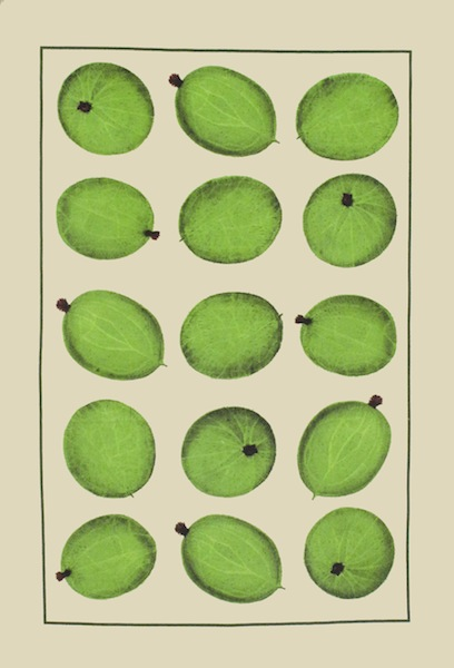 Gooseberry Pair of Cotton Tea Towels